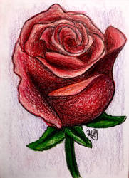 Rose drawing by TheHunterOfEvil