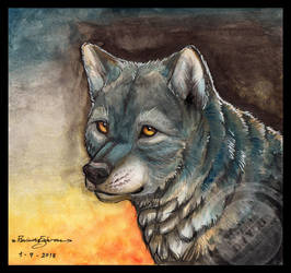 Wolf - Water color practice No.1 by R-FakonWolf