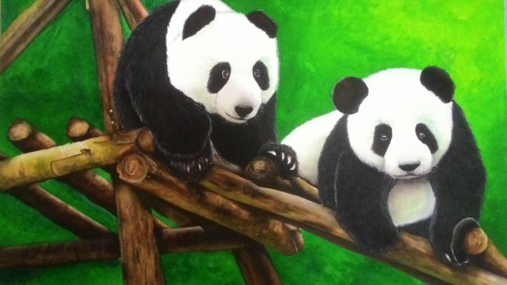 Pandas by Druice