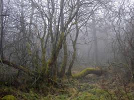 Foggy Swamp IX by s8472