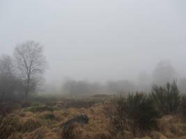 Foggy Swamp X by s8472