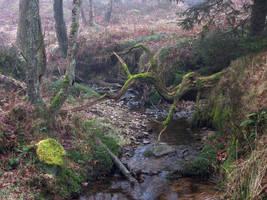 Foggy Swamp XI by s8472