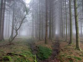 Foggy Swamp XV by s8472