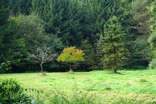 Three Trees by s8472