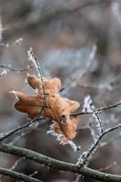winter on impression 2 by Juhubaer
