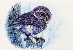 Owl by ohmindflowers