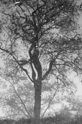 Nebelspiegelbaum 2 by Blaetterklingen