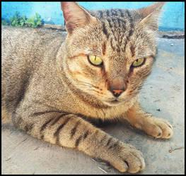 a cat's portrait by luiss9