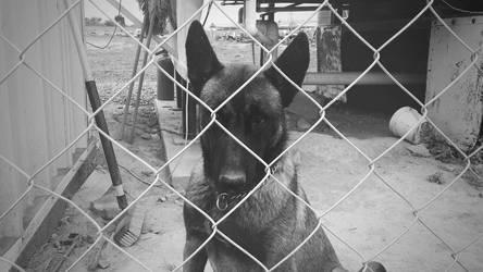 Sad Dog by luiss9