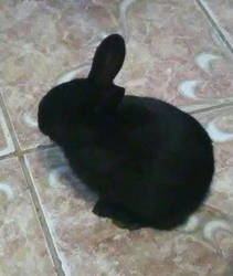 my rabbit it by francy-is-the-best