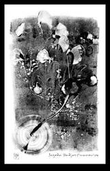 mono 14 'chabazie' by JPSiwanowicz