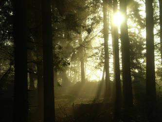 Sunrise in the Swedish forrest by Swebilius