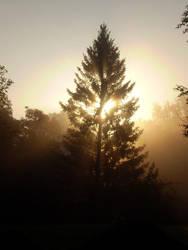 Sunrise Spruce by Swebilius