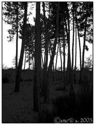 Thin wood by amarilli