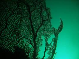 coral by herringbone23