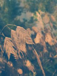 semillas by Blue-Froggy