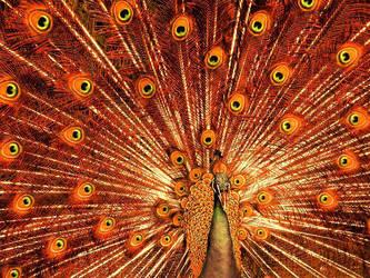 Fireworks peacock by Jona25