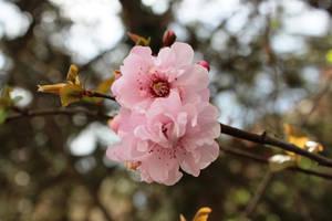 March flowers by Jona25