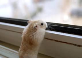 Little baby Hamster by Kivo-De-Fly
