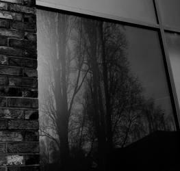 tree reflection 3 by BlackFluffyRainbows