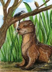#154 - Eurasian Otter - ACEO / KAKAO by malloth86