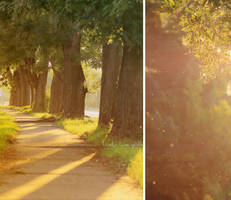 Magical forest by Bucikah