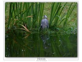 Heron 2 by Wirikos