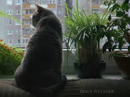 Dog's weather by Wirikos