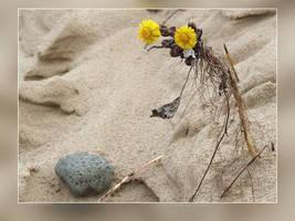 Pilgrim of Spring by Wirikos