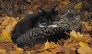 Autumn Love. by Wirikos