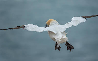 Bird fashion show - Helgoland by Wirikos