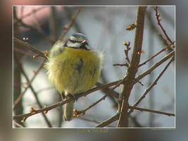 Yellow 'Birdball' by Wirikos