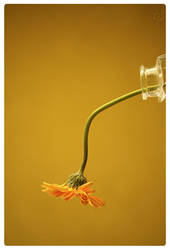 pouring a flower by mi9ba7
