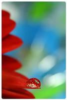 red drop by mi9ba7