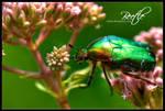 Beetle by talsei