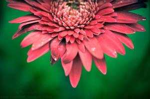 Half.Flower by Suinaliath