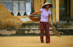 Rice and life - II by Suppi-lu-liuma