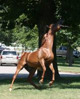 Chestnut Arabian 2 by littlenake
