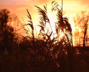 Reed by GaiusNefarious