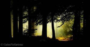 In the shadow by GaiusNefarious