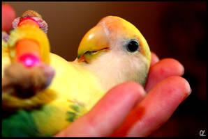 Chilling Lovebird by VaporUmbreon