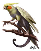 Cockatiel Gryphon by CharReed