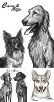 Pet Pic Sketches by CharReed