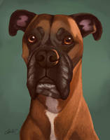 Oz the Boxer by CharReed