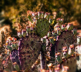 purple camo by fotoPingo