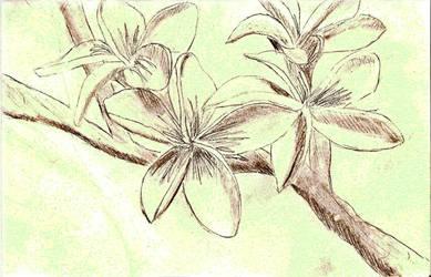Flowers sketch by Loser17Juggalette