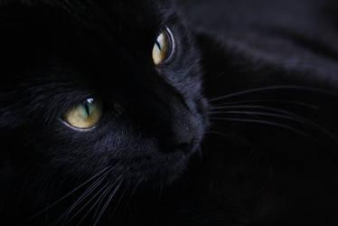 Black Cat by Mysticara