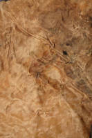 Leather texture 9 by wojtar-stock