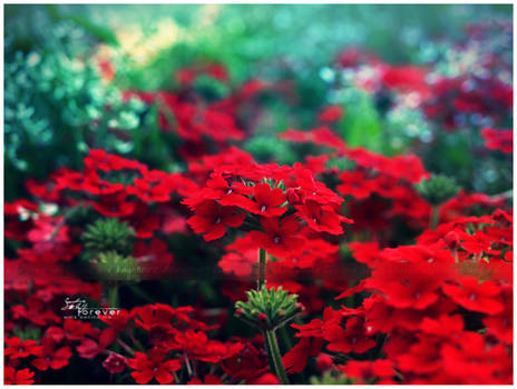 RedSea,GreenHorizon (LGS 2012) by Kay-Noire