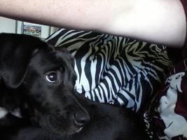 Meet my dog, Stela by Trendorman